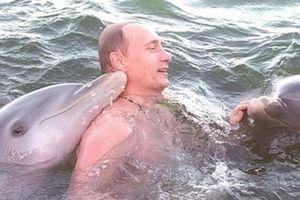 Lần đầu công bố video Tổng thống Putin bơi cùng cá heo ở Cuba