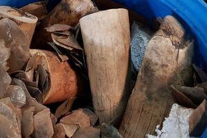 Phát hiện gần 4 tấn ngà voi, 14 tấn vảy tê tê qua soi chiếu hàng hóa lưu giữ, xếp dỡ