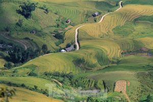 Ruộng bậc thang Mù Cang Chải thành Di tích quốc gia đặc biệt