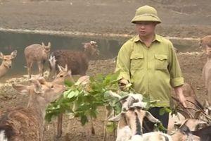 Ninh Bình: Thu chục tỷ đồng/năm nhờ nuôi con đặc sản