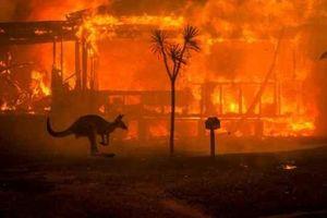 Cơn mưa 'vàng' xuất hiện tại Australia sau nhiều ngày cháy rừng