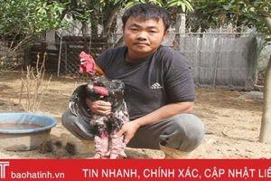 Gà Đông Tảo, lợn rừng 'cháy hàng' dù hơn 2 tuần nữa mới Tết
