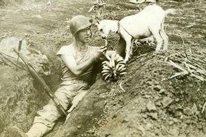 Khoảnh khắc nghỉ ngơi hiếm hoi của những người lính trong Thế chiến II