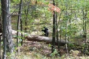 Thanh niên bị quật chết khi cố gắng chụp ảnh gấu