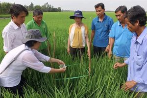 Quy chuẩn canh tác bền vững SRP cho lúa gạo Việt Nam