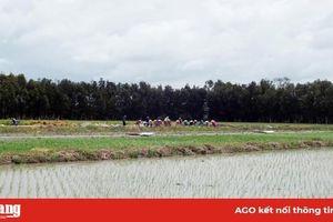 Xây dựng chuỗi giá trị lúa, gạo theo tiêu chuẩn SRP