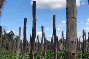 Phát triển nông nghiệp: Ngẫm từ câu chuyện hồ tiêu