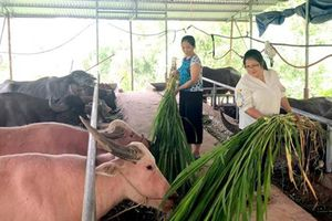 TT Khuyến nông Tuyên Quang: Những dấu ấn nổi bật