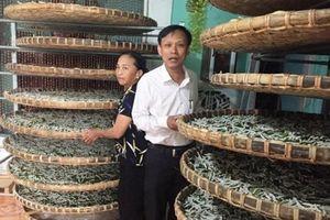 Quảng Nam khôi phục nghề trồng dâu nuôi tằm