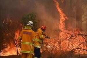 Định lượng 'được' và 'mất' của kinh tế Australia sau thảm họa cháy rừng lịch sử (Phần 1)