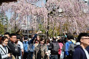 Doanh thu du lịch toàn cầu dự kiến tăng 3,6% trong năm 2020