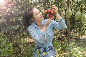 Đã mắt ngắm vườn cà chua thân gỗ trong khu Resort triệu đô của Lý Nhã Kỳ