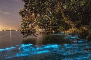 Lý giải hiện tượng ánh sáng xanh kỳ ảo của các sinh vật phù du trong nước