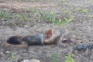 Người phụ nữ tử vong bất thường dưới gầm cầu cao tốc