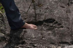 Những dấu chân người khổng lồ gây chấn động thế giới
