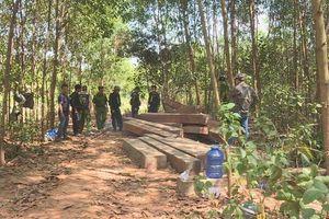 Đắk Lắk: Để xảy ra phá rừng quy mô lớn, 4 cán bộ công ty lâm nghiệp bị bắt