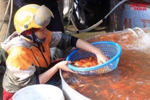 Chợ cá chép đỏ nhộn nhịp trước ngày tiễn Táo quân về trời