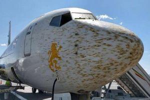 Va phải đàn châu chấu 'khủng', máy bay phải chuyển hướng đột ngột