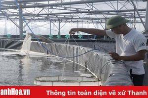 Huyện Nga Sơn phát triển nuôi trồng thủy sản theo hướng công nghệ cao