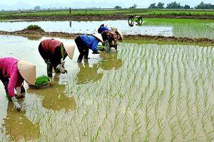 Chuẩn bị nước cho gieo cấy cho vụ Đông Xuân