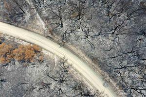Động vật Australia chết mòn vì đói khát dù sống sót cháy rừng