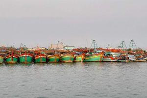 Quản lý tàu cá ở Cà Mau: Cần có chế tài đủ mạnh