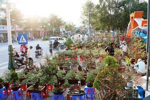 Cây cảnh từ các vùng miền nhộn nhịp xuống phố đón Tết Canh Tý ở Ninh Thuận