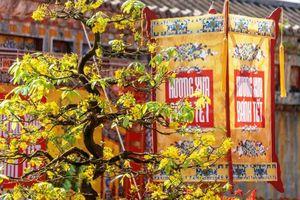 Mãn nhãn với 'Hương xưa bánh Tết' trong Hoàng cung Huế