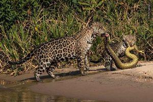 Những khoảnh khắc ấn tượng nhất của các loài động vật hoang dã