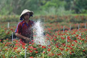 Để làng hoa Sa Đéc khoe sắc 4 mùa