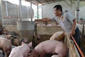 Nhìn lại một năm thăng trầm của thịt lợn trên thị trường
