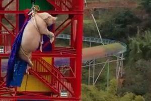 Bắt lợn sống chơi trò mạo hiểm, công viên giải trí Trung Quốc bị cư dân mạng chỉ trích