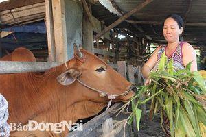 Huyện Tân Phú: Cùng người dân thoát nghèo