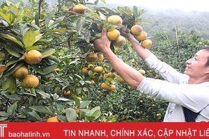 'Bà con chung sức, doanh nghiệp đồng hành, khó khăn mấy sản xuất nông nghiệp cũng vượt qua'