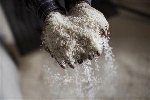 Quảng Bình phân bổ hơn 800 tấn gạo cho người dân trong dịp Tết