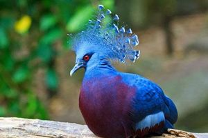 Những chú chim có bộ lông đẹp nhất thế giới