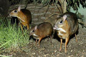 Những loài động vật 'vô địch thế giới' ở Việt Nam