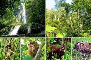 Hợp tác bảo tồn đa dạng sinh học, quản lý các khu bảo tồn liên biên giới Việt Nam - Lào