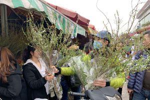 Hoa Tết độc lạ, bạt ngàn chủng loại cho khách chọn chơi Tết Canh Tý