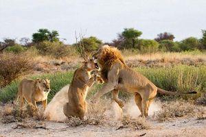 Sư tử cái đánh ghen điên cuồng khiến 'bạn tình' choáng váng