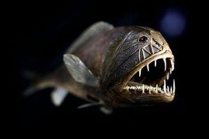 Những loài động vật quái dị sống ở nơi sâu nhất trên Trái Đất