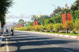 Gần 900 cây mai trồng trên 5km dải phân cách ở Bà Rịa - Vũng Tàu nở hoa đón Tết