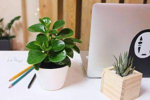 Năm mới, những loại cây trên bàn giúp hết chán, hết căng thẳng