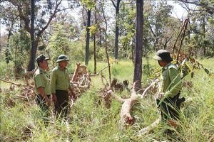 Nỗ lực bảo tồn hệ sinh thái Vườn Quốc gia Yok Đôn