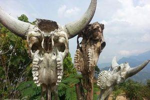 Vùng đất sọ trâu bí ẩn của bộ tộc ít người ở Hà Giang