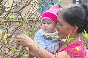 Độc đáo loại 'cây gọi Tết' giúp cả làng ấm no