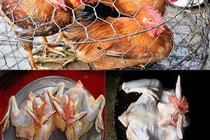 Quá tải dịch vụ mổ gà cúng ngày 30 Tết ở Nghệ An