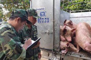 Phát hiện gần 1 tấn lợn nhập lậu vào Việt Nam tiêu thụ