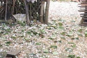 Hơn 5.000 ngôi nhà 'mất Tết' do mưa đá