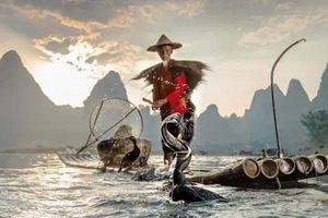 Ngoạn mục cảnh ngư dân Trung Quốc đánh cá bằng chim cốc đẹp như tranh vẽ